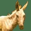 :donkey_dp: