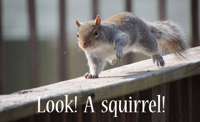 lookasquirrel